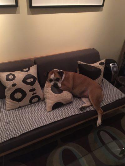 Gracie The Boxdog